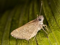 Moth with water drops on leaf. Photo of moth with water drops on leafn Stock Image