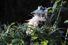 Moth Web on Outdoor Plant Royalty Free Stock Photo