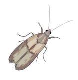 Moth on a white background. Illustration Vector Illustration