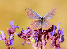 Moth on wild flowers Royalty Free Stock Photo