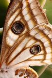 Moth wing Stock Photo