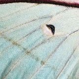 Moth wing, close-up Royalty Free Stock Images