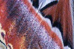 Moth wing, close-up Royalty Free Stock Image