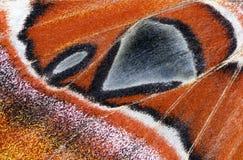 Moth wing, close-up Royalty Free Stock Photo