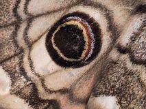 Moth wing detail. Eyespot on Saturnia Eudia pavonia. Stock Images