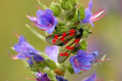 Moth4 Images libres de droits