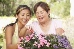 Mother With Adult Daughter Gardening Together Stock Images