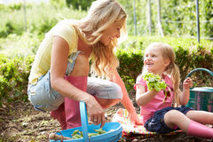 Mother And Daughter Harvesting Radish On Allotment Stock Photo