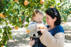 Free Mother And Son, Collect Oranges Together, Fruit Orange Grove, Organic Farm, Israel Royalty Free Stock Images - 171214989