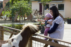 Mother and baby at animals farm. Mother holding her child in her arms to see the pony at the animals farm stock image