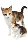 Mother and baby cats rescued from the street Royalty Free Stock Photo