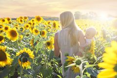 Mother and Baby Daughter Walking through Sunflower Field at Sunset. A mother and her baby daughter are peacefully walking through a sunflower field during the stock images