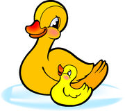 Mother with baby duckling. Illustration of mother duck and baby duckling on water, isolated on white background Royalty Free Stock Photo
