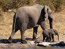 Mother and baby elephant Royalty Free Stock Images