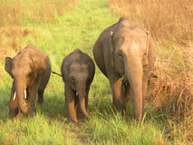 Mother with Baby Elephant Royalty Free Stock Photography