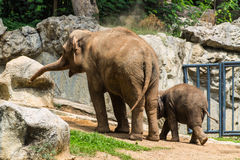 Mother and baby elephant in Chiangmai Zoo , Thailand Stock Photos