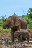 Mother and baby elephant drinking water Royalty Free Stock Photography