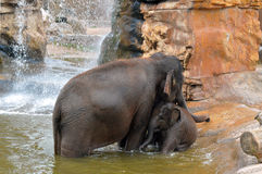 Mother and baby elephant playing in the water Stock Photos