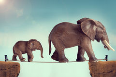 Mother and baby elephant on a tightrope Royalty Free Stock Photo