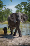 Mother and baby elephant by water hole stock photography