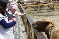 Mother and baby feeding the pony Stock Image
