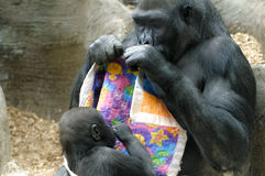 Mother and Baby Gorilla Royalty Free Stock Images