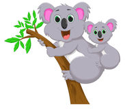 Mother and baby koala Stock Photography