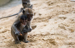 Mother and Baby Monkey Royalty Free Stock Photos