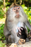Mother and baby Monkey Royalty Free Stock Images