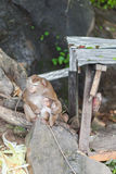 Mother and baby monkey Royalty Free Stock Image
