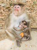 Mother and baby monkey view Royalty Free Stock Photo