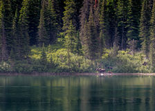 Mother and Baby Moose Across Lake Stock Image