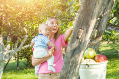 Mother with baby picking apples from an apple tree Stock Photos