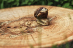 Mother and baby snail Stock Photo