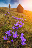 Mother with a baby in a valley of crocuses Stock Photo