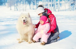 Mother and baby with white Samoyed dog together on snow in winter Stock Photos