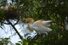 Mother Bird. White Bird in the nest Stock Images