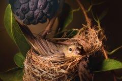 Mother Bird Royalty Free Stock Photo