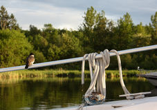 A mother bird guarding her nest on a boat Stock Photos