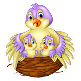 Mother bird with her two babies in the nest Stock Images