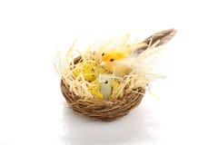 Mother bird on nest Stock Photos