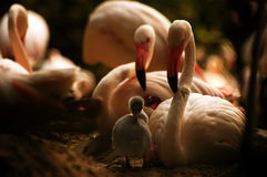 Mother bird protects young bird Stock Image