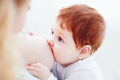 Mother breastfeeding her adorable ginger baby. Baby looks at mom, bonding concept. Young mother breastfeeding her adorable ginger baby. Baby looks at mom royalty free stock photo