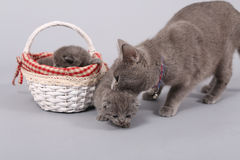 Mother cat with her baby Stock Image