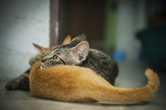 Mother cat and her kitten Stock Photo