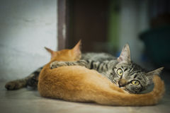Mother cat and her kitten Stock Photos