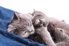 Mother cat hugging her babies Stock Image