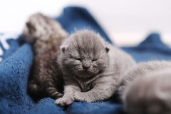 Mother cat hugging her babies Royalty Free Stock Photo