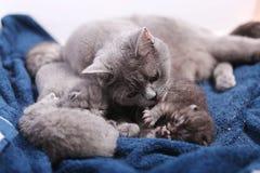 Mother cat hugging her babies Stock Photo