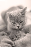 Mother cat hugging her baby Stock Image